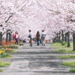 人気の花見スタイルは昼間に静かに?